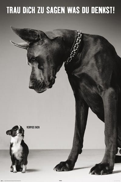 Photo of Cartel de dos perros alemán