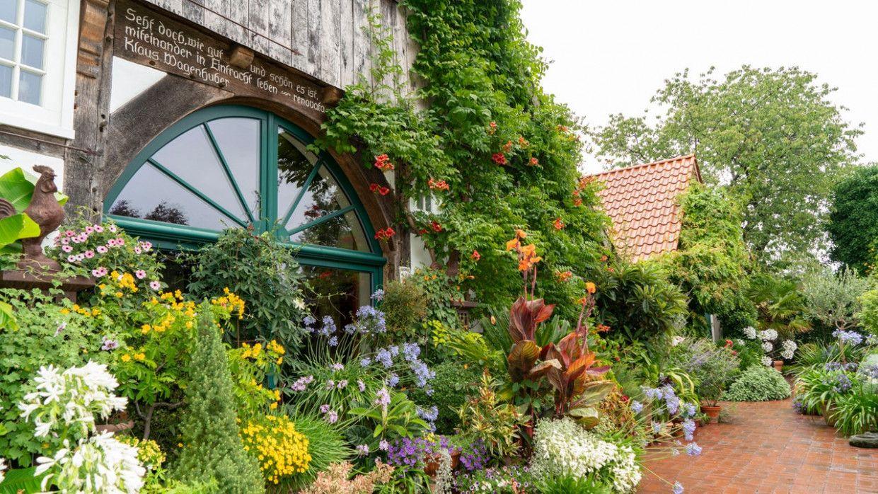 Garten Und Lecker Wdr Plants
