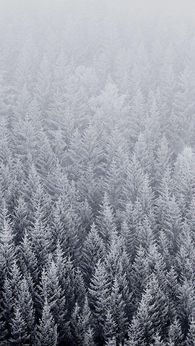 apple wallpaper snowy trees