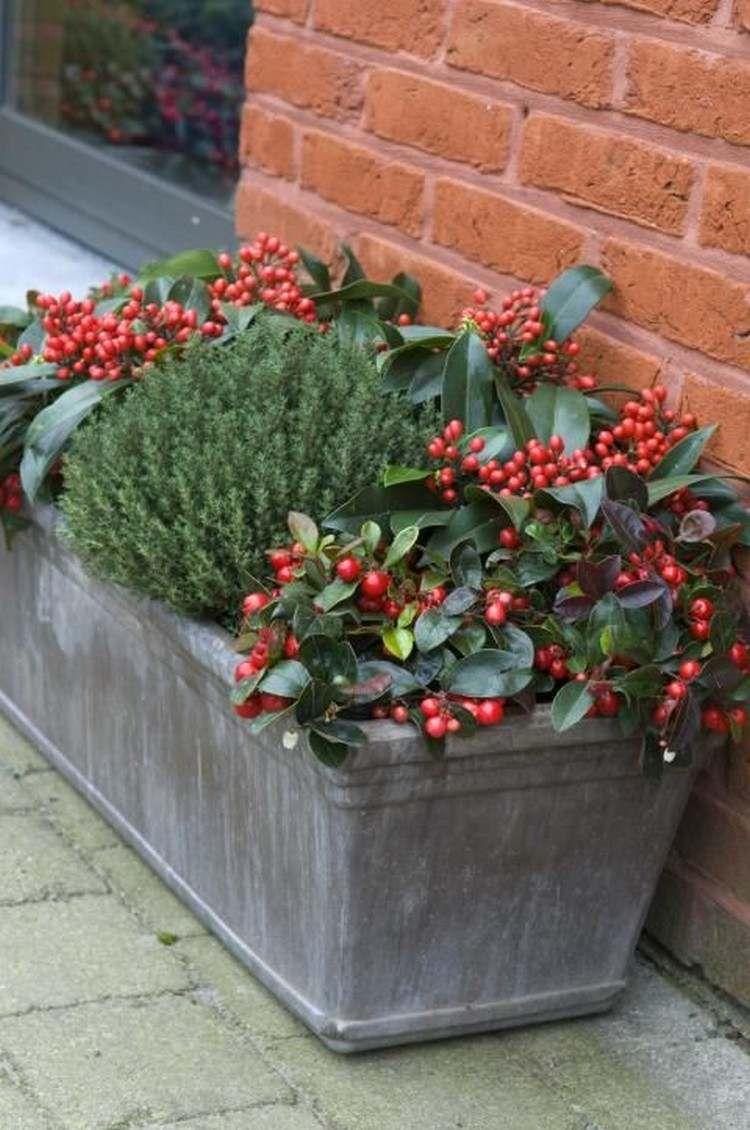 Jardinière d'hiver les meilleures idées pour valoriser l