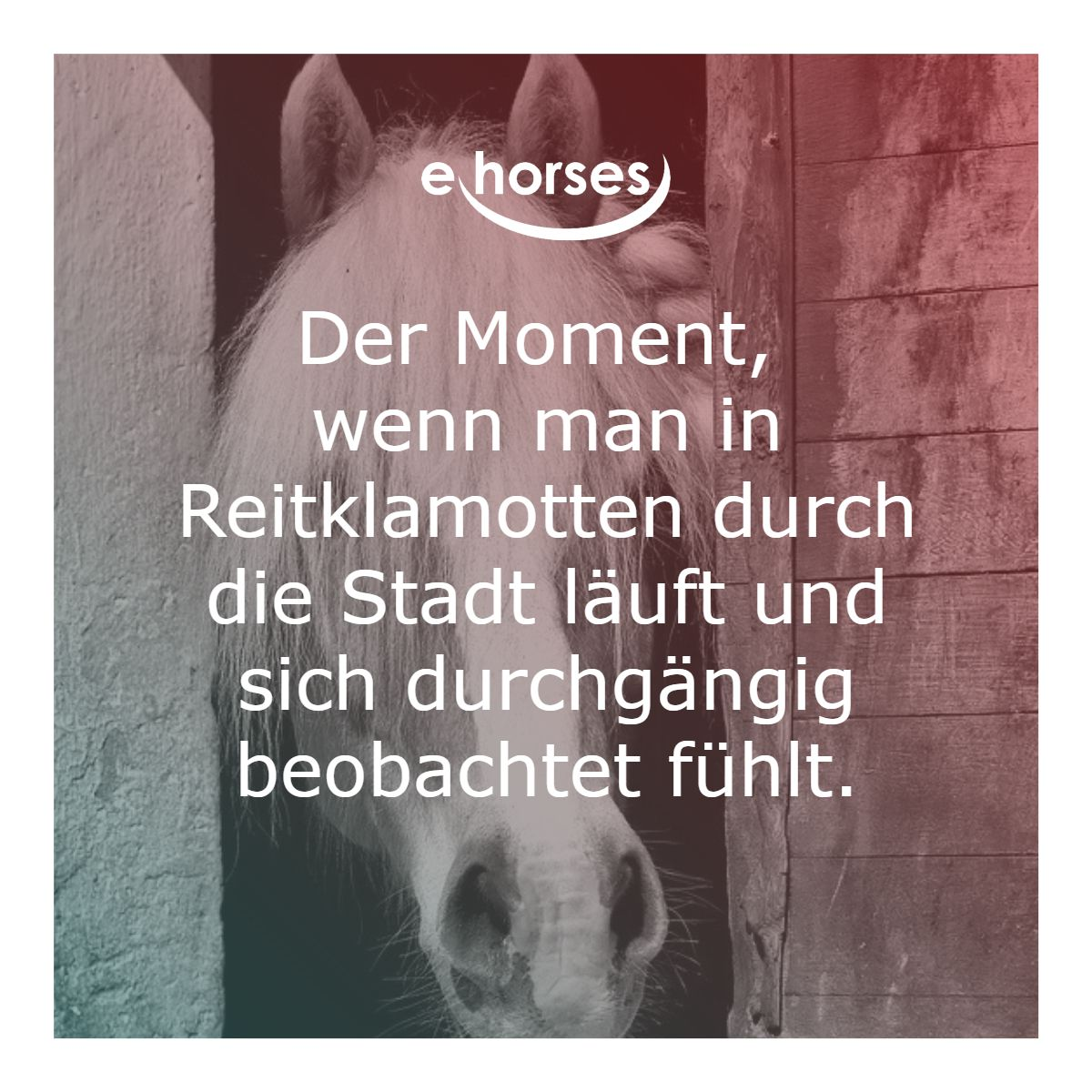 Pferdespruche Lustige Pferdespruche Urkomische Zitate Pferdespruche