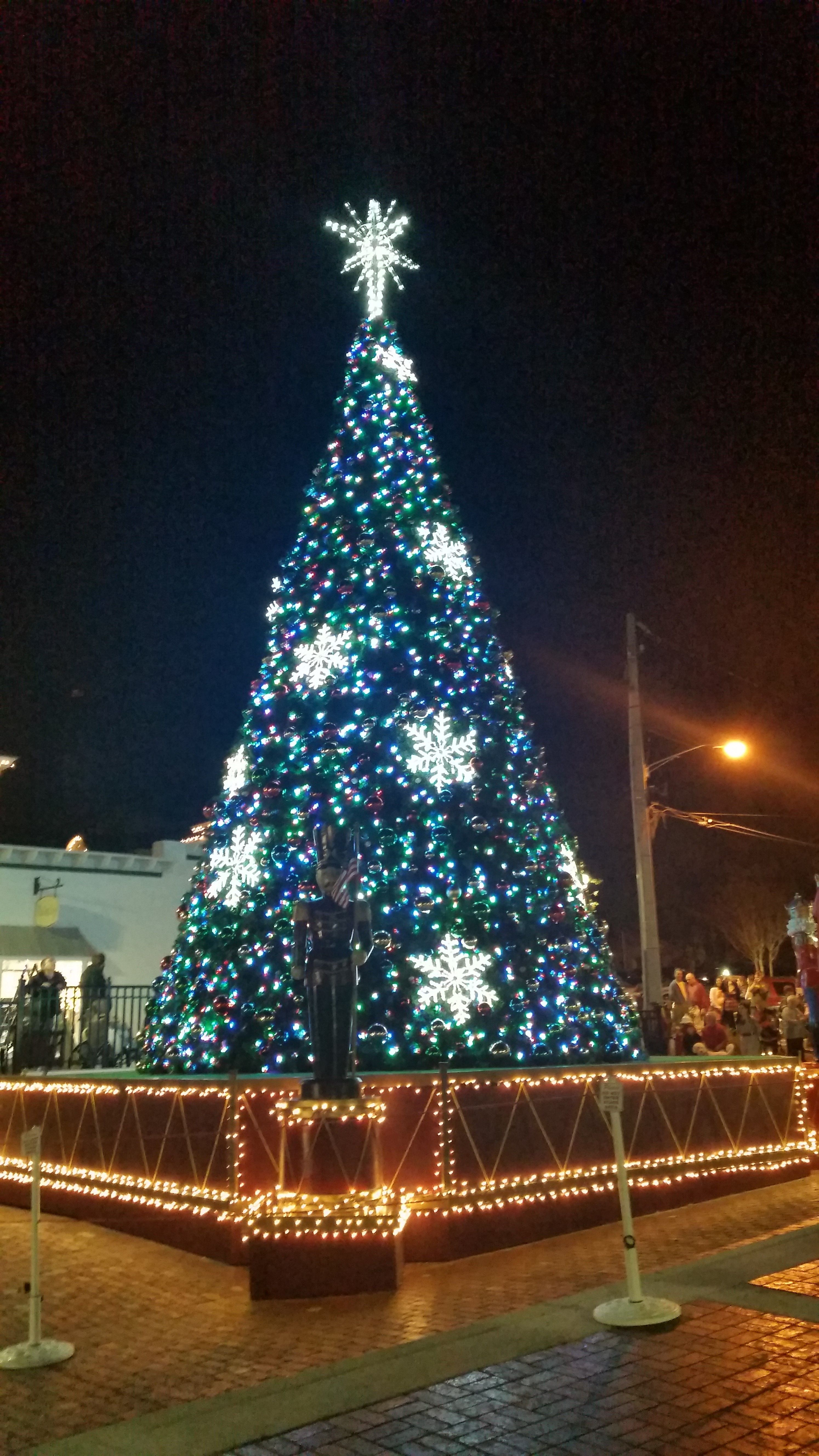 Mount Dora s tree located in the heart of the new pedestrian plaza