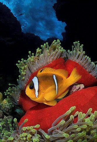 fish animals adana turkey lifestyle diving underwater water animals color schemes