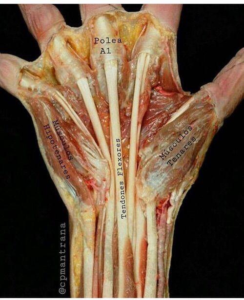 Imagen vía We Heart It #anatomia #dreams #Estudio #medicine #salud ...