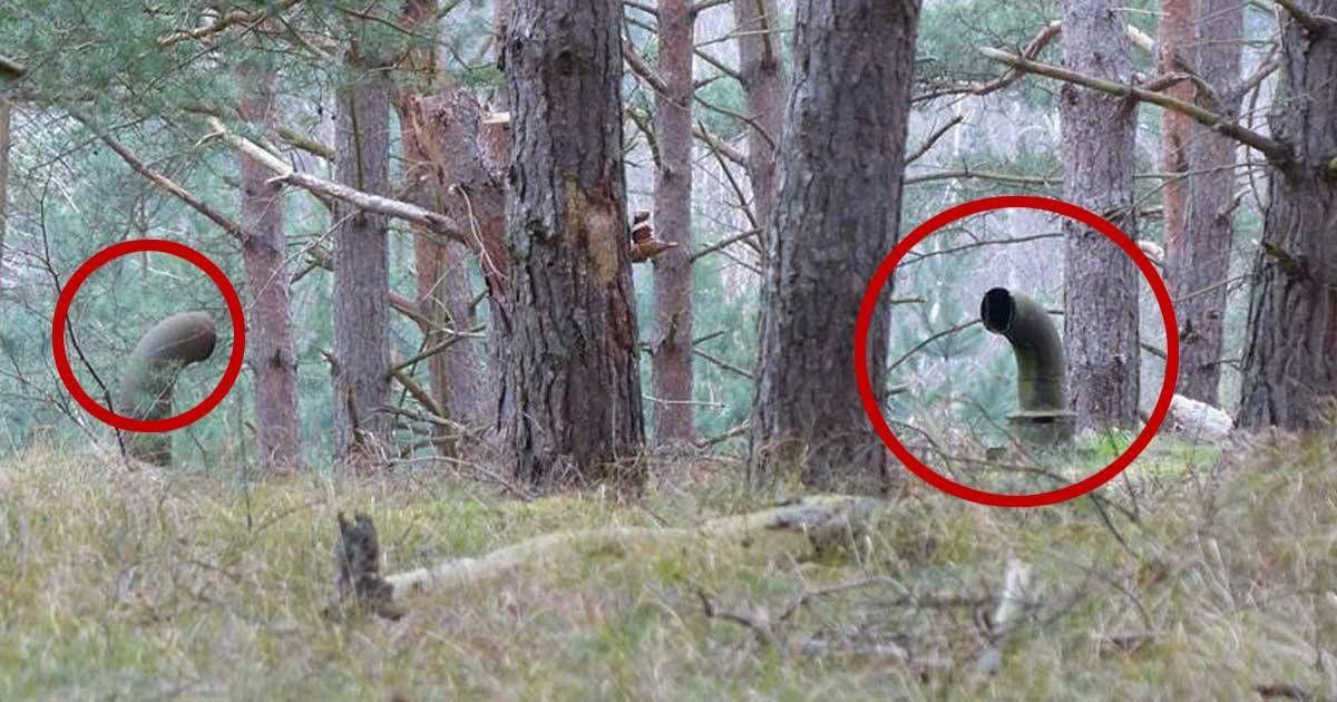 Hidden In The Woods Deutsch