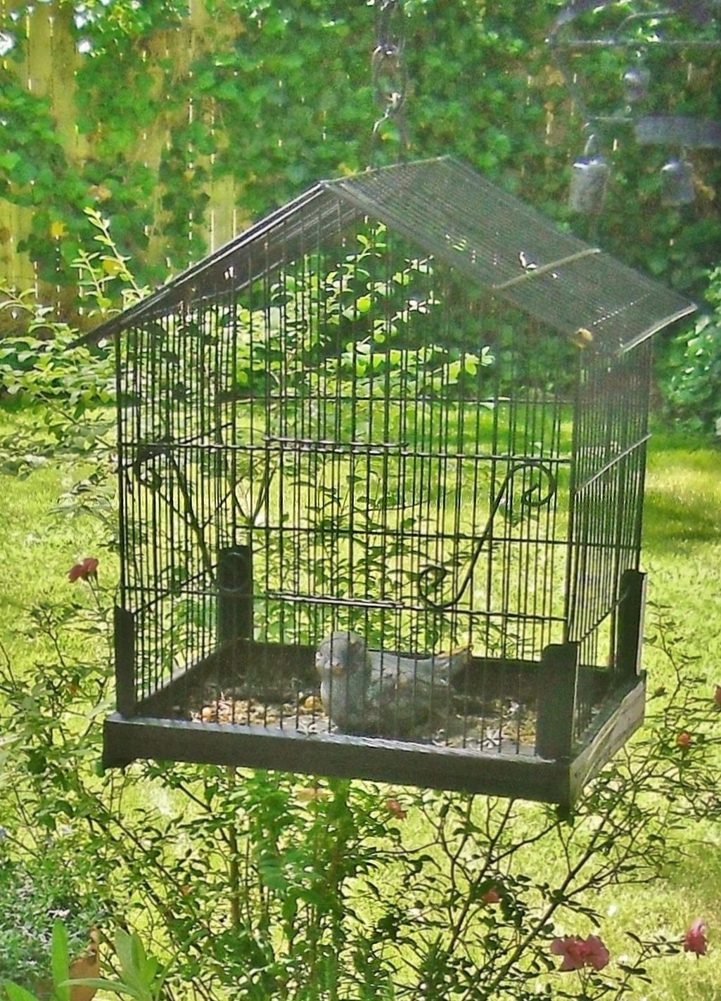 Birdcage Beautiful Birdcages Pinterest Bird Cages Birdcage