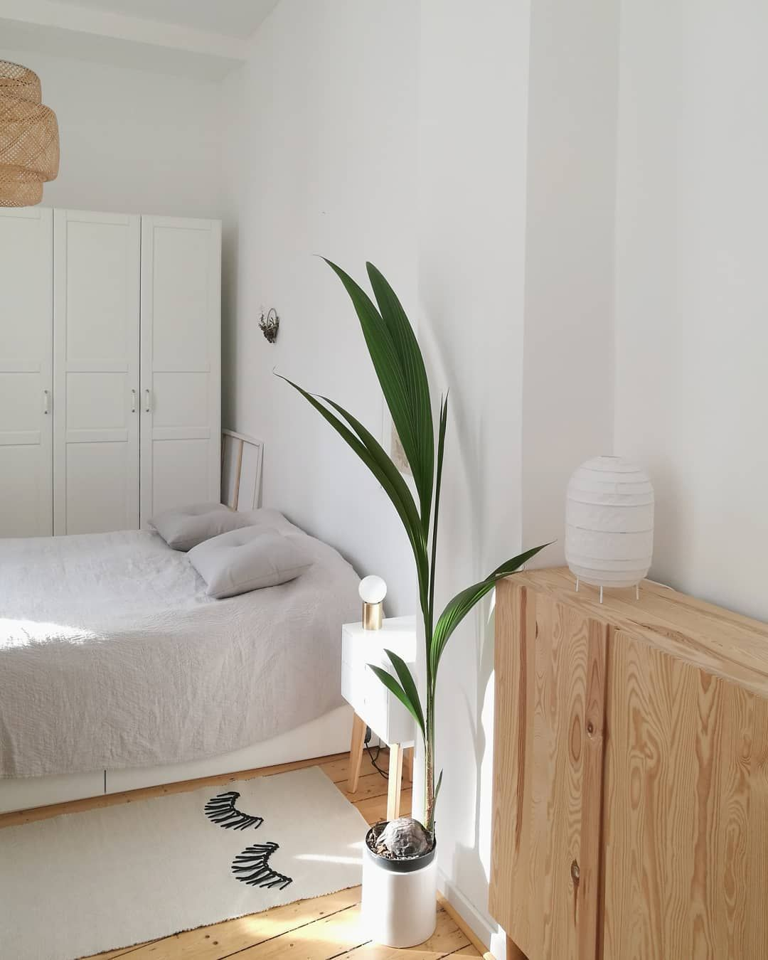 Die Palme Ist Vom Wohnzimmer Ins Schlafzimmer Gewandert Mybdrm Bedroom Schlafzimmer Palme Kokosnusspalme So Wohnzimmer Zimmer Inneneinrichtung