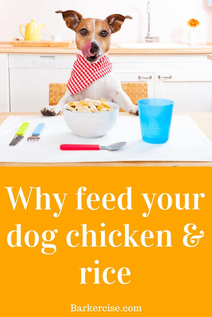 Feeding a dog chicken \u0026 rice everyday
