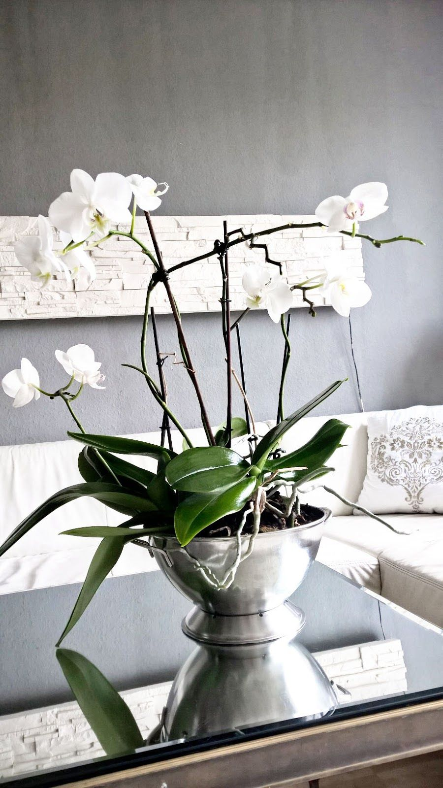 orchideen wohnzimmer elegant gestalten organisation pinterest orchideen haushaltstipps. Black Bedroom Furniture Sets. Home Design Ideas