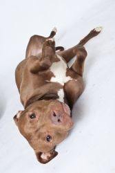 Adopt Xena On Happy Dogs Dog Cat Terrier Dogs