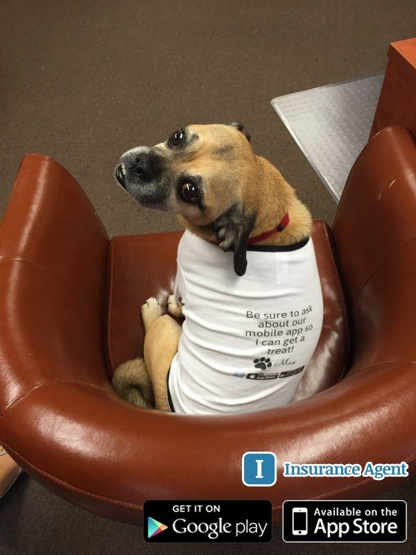 Our Mascot Max Wants You To Download Our Insurance Mobile App