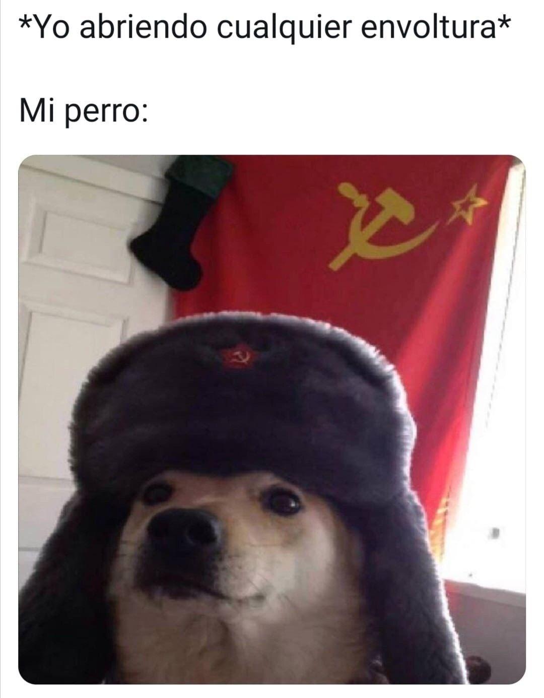Perro Comunista Memes Divertidos Meme Divertido Memes Perrones