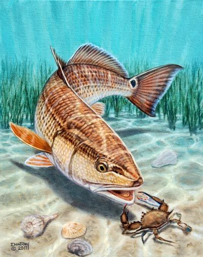 Images Of Redfish