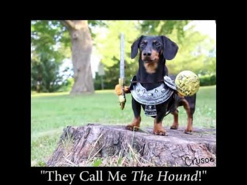 crusoe the dachshund | Crusoe the Celebrity Dachshund ...