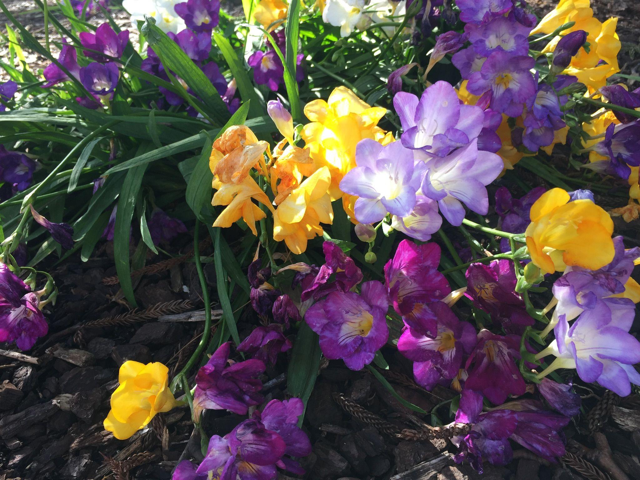 Lovely spring photos iuve taken pinterest