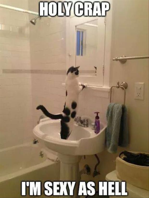 Funny Bathroom Mirror Quotes randomness is awesomeness | car crash, funny pictures and cat cat