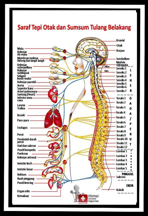 Spesialis saraf kejepit bandung. Pengobatan saraf kejepit