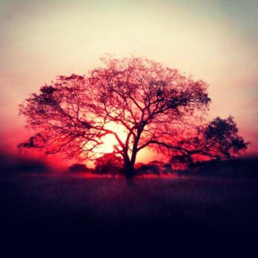Indahnya pohon itu seprti indahnya hidup ini