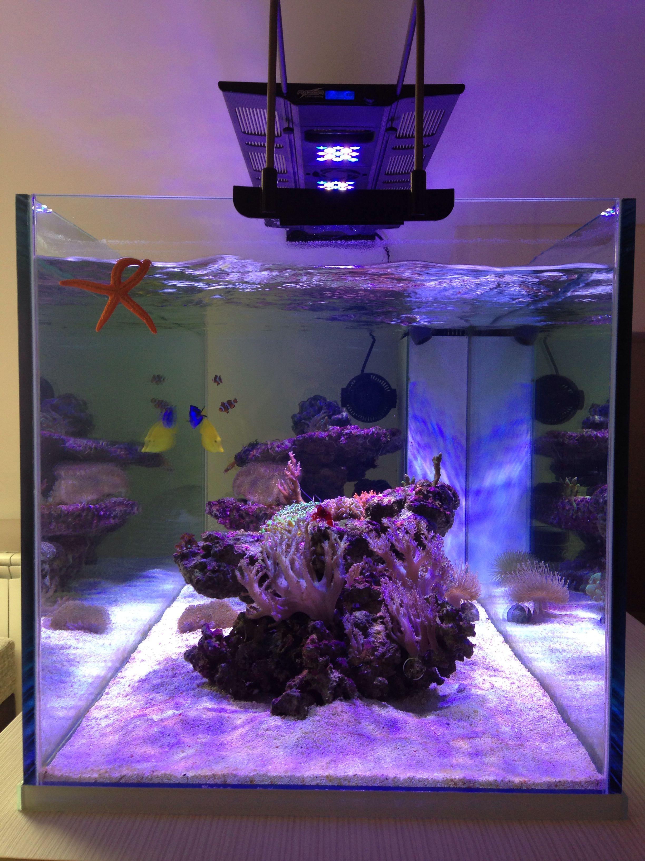 0d5ef3dd8134ecd6220814009f82322f Frais De Jbl Aquarium Conception