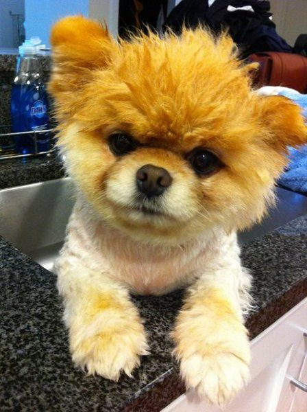 Wet Boo Bath Time Boo The Dog Very Cute Puppies World