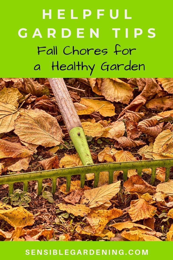 Helpful Garden Tips for Fall with Sensible Gardening. Easy fall tasks to keep your garden healthy and beautiful.