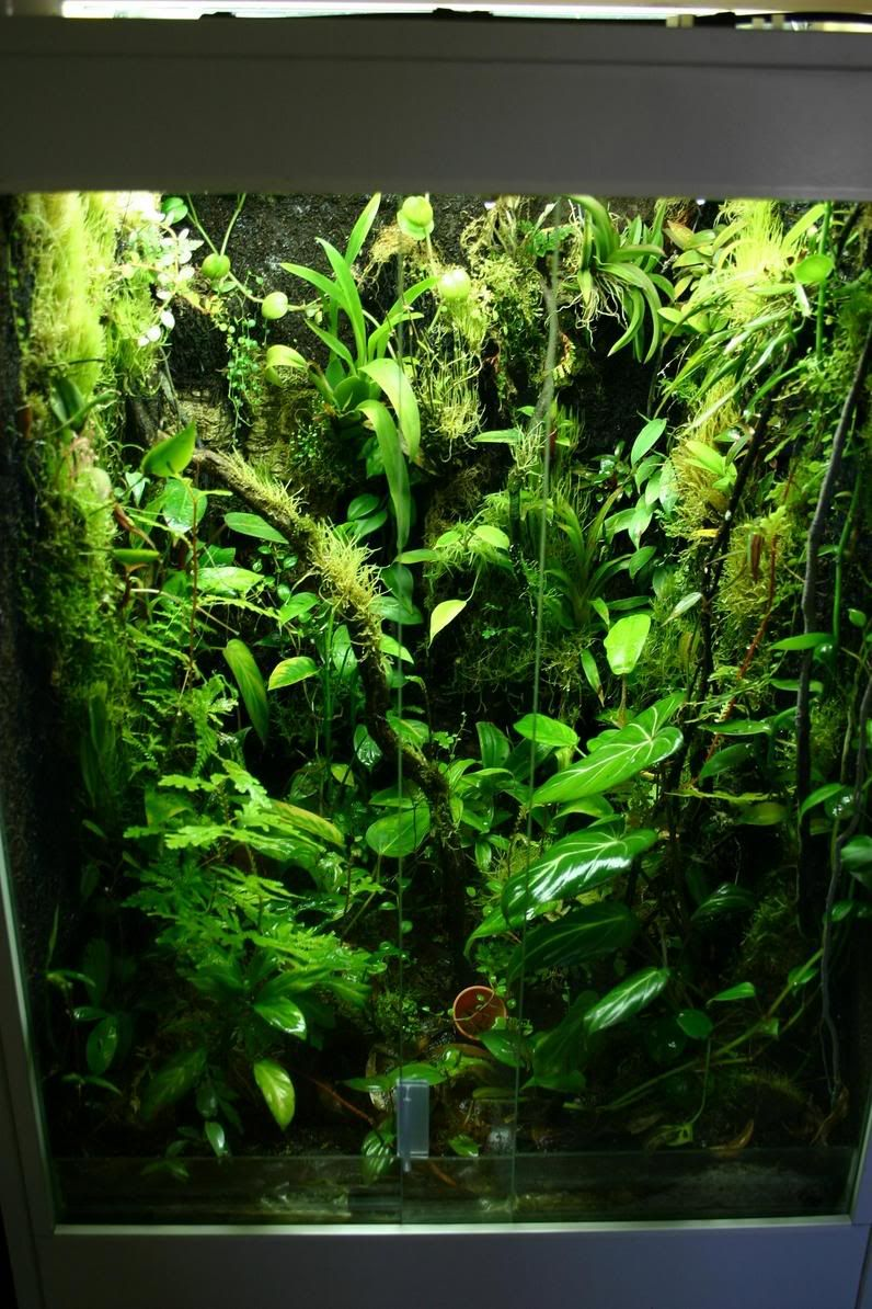 Click The Image To Open In Full Size Gecko Terrarium