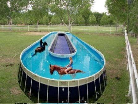 Equine Pool Horse Training Pool New Technology Legacy