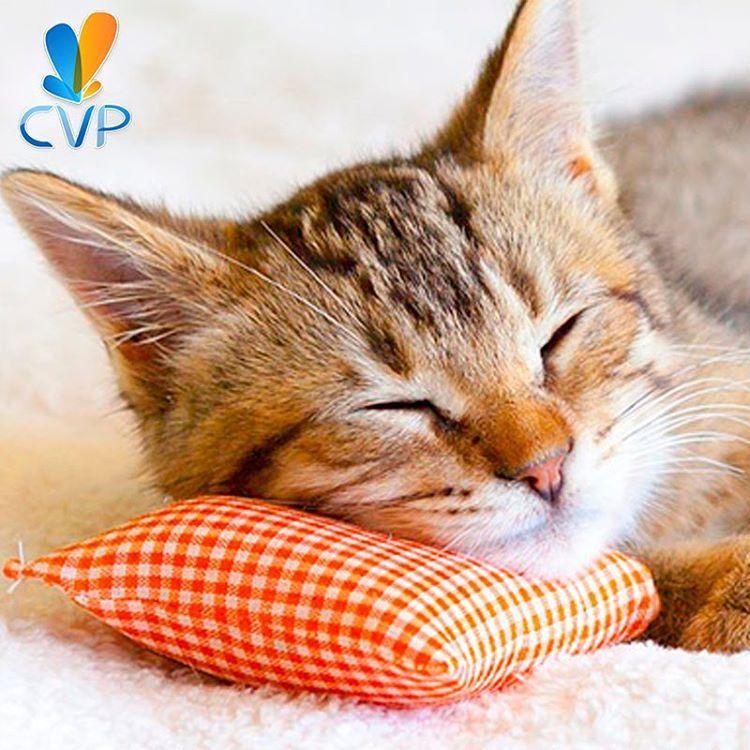 El hospital, guardería y consultorio, hacen parte de nuestros #ServiciosCVP para felinos En #CVP además encuentras atención en fisioterapia y radiología para acompañarte en cada etapa. Visita:http://goo.gl/tS2JfZ y conoce nuestro portafolio completo, llámanos al 4446287 (4446CVP) o escríbenos a citas@clinicaveterinariapoblado.com para reservar y obtener descuentos. Estamos sobre la calle 10 A #40 - 52  #ServiciosCVP