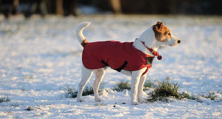 Cozy Canines 8 Dog Jackets For Winter Weather Dog Winter Coat