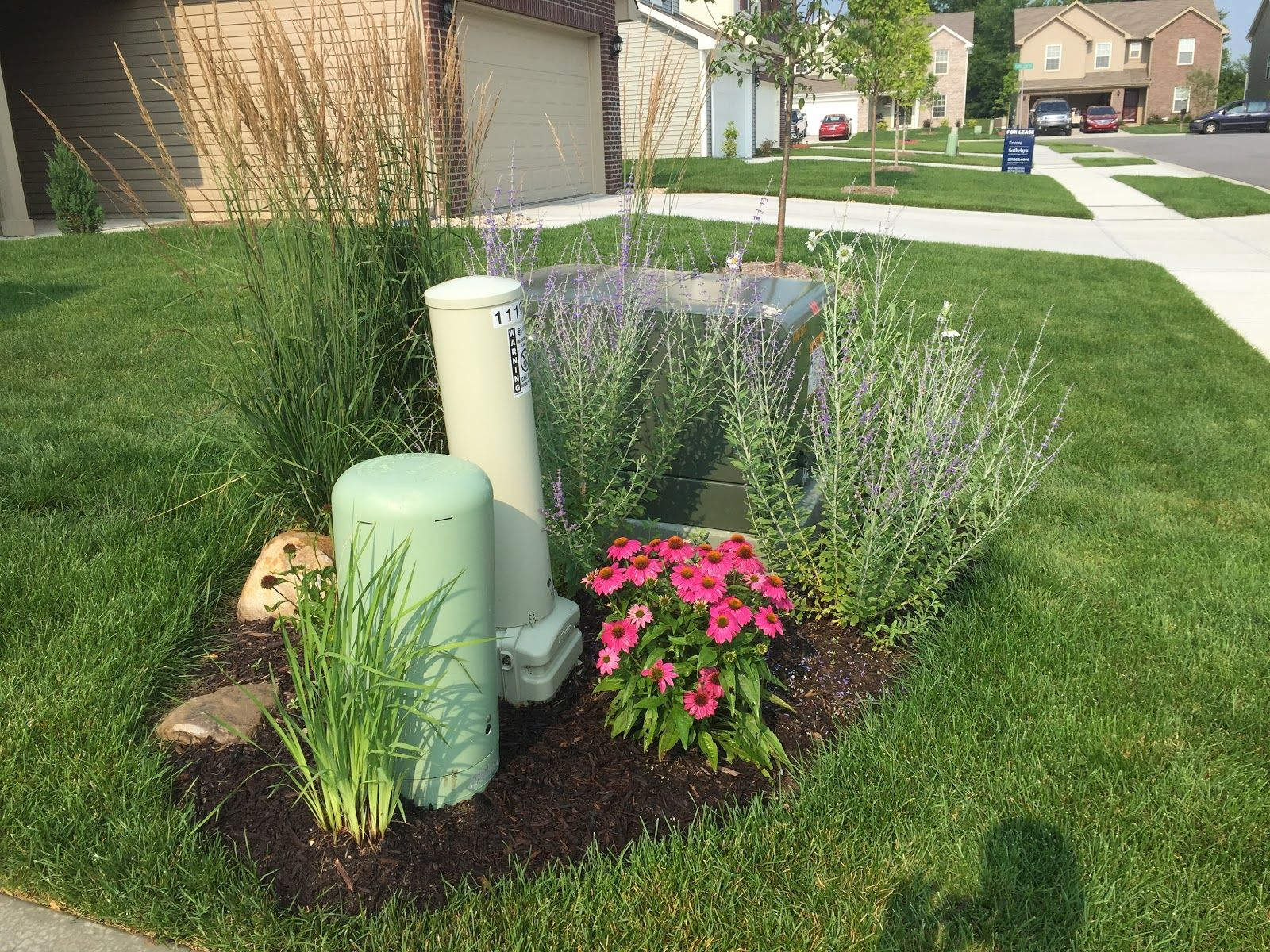 Grasses to hide utility box google search flowers for Landscape rock utility cover