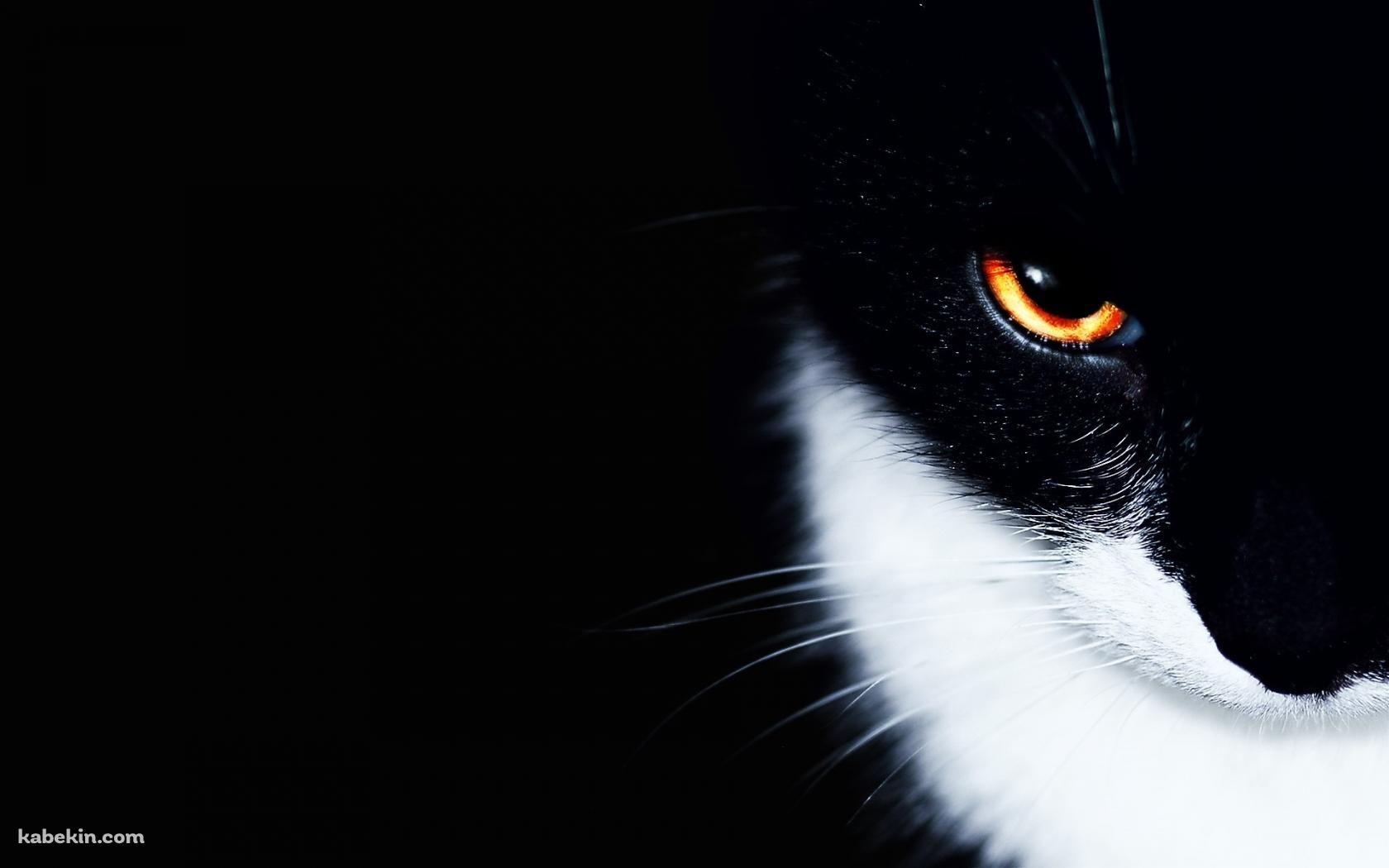 オレンジの眼をした黒猫 1680 X 1050 の壁紙 壁紙キングダム Pc