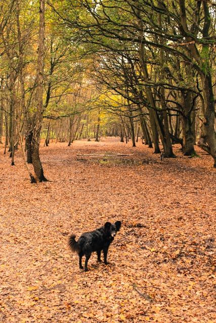 Find London Dog Walks on The Dogvine with downloadable maps & navigation for your phone. This week, explore the lakes and woodland walk on Wimbledon Common.