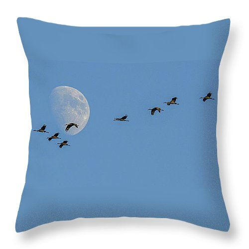 "Sandhill cranes 5 Throw Pillow 14"" x 14"" by Darrell P Delahousaye"
