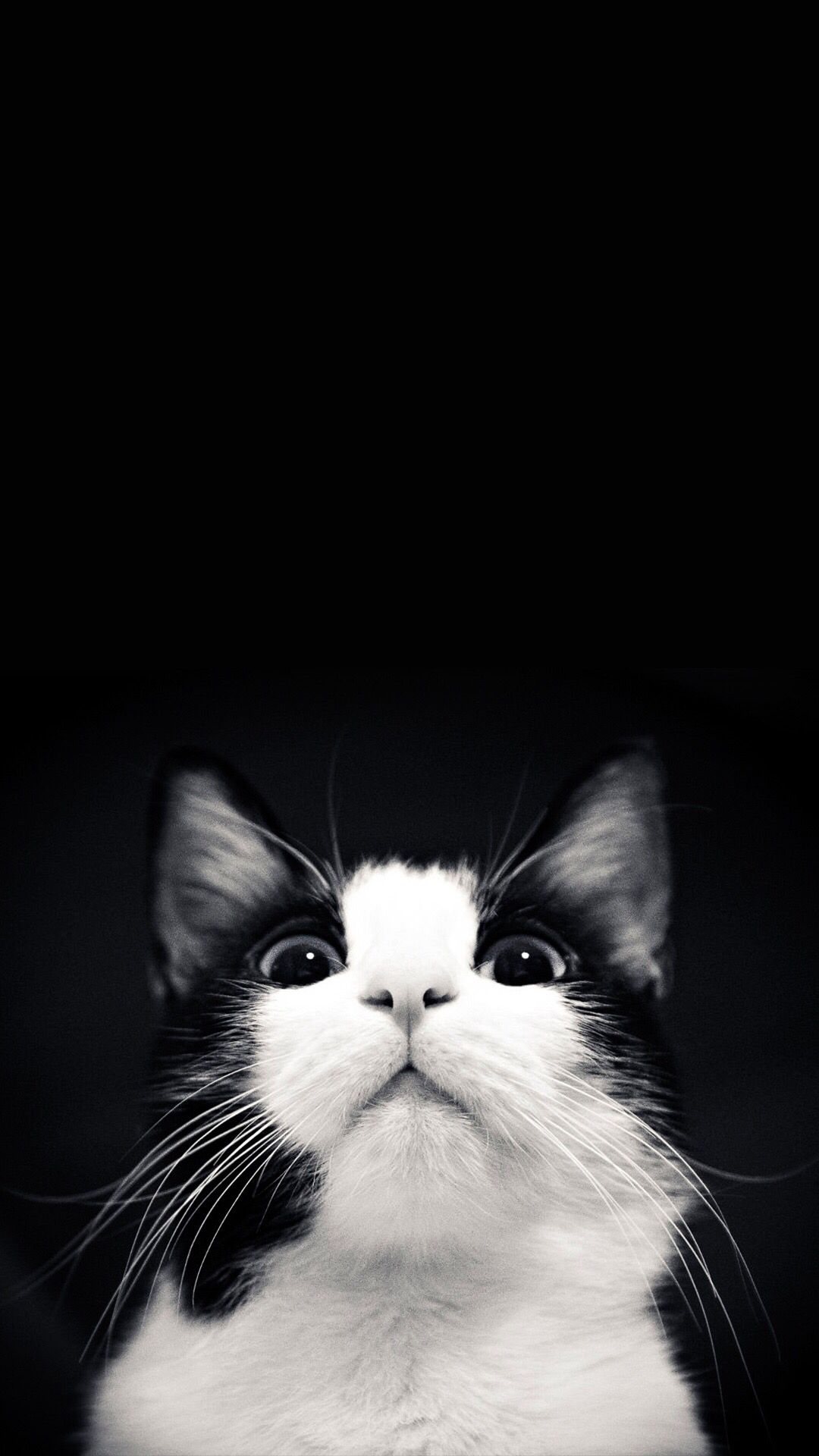 Pin Di Cats Black White