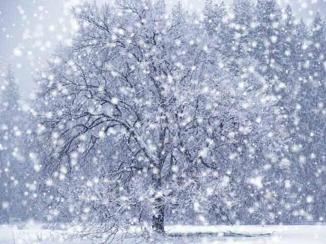 Most Beautiful Snow Pictures Snowfall Snowfall Snowfall