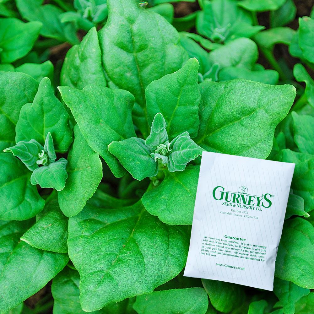 Gurney's Spinach New Zealand (50 Seed Packet) Seed