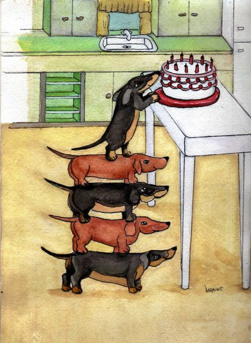 #Dachshund Visit www.facebook.com/hotdoggstand for more funny pictures / How to train a Dachshund http://tipsfordogs.info/90dogtrainingtips