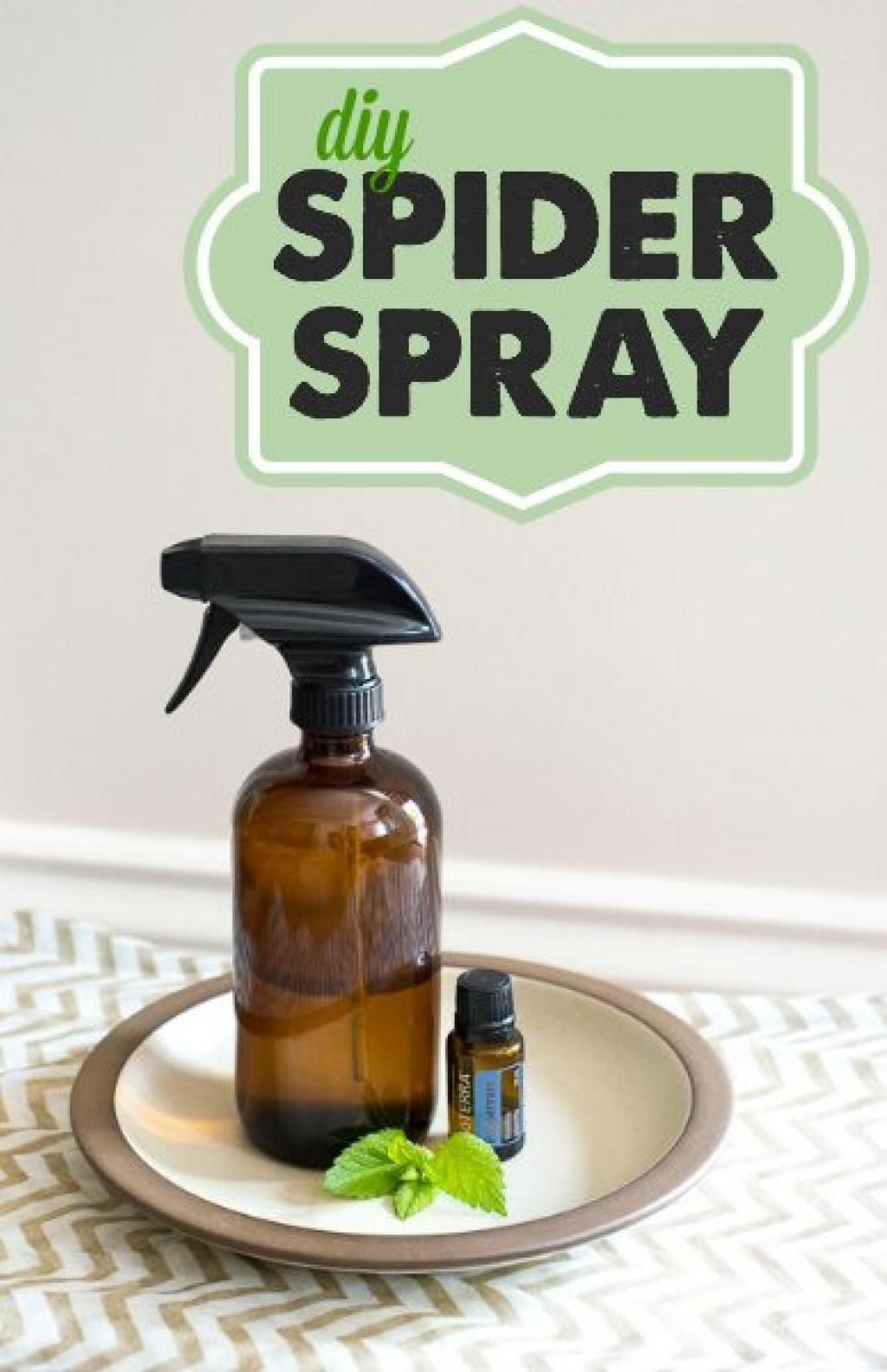 Here is how to make your own spider repellent very easily
