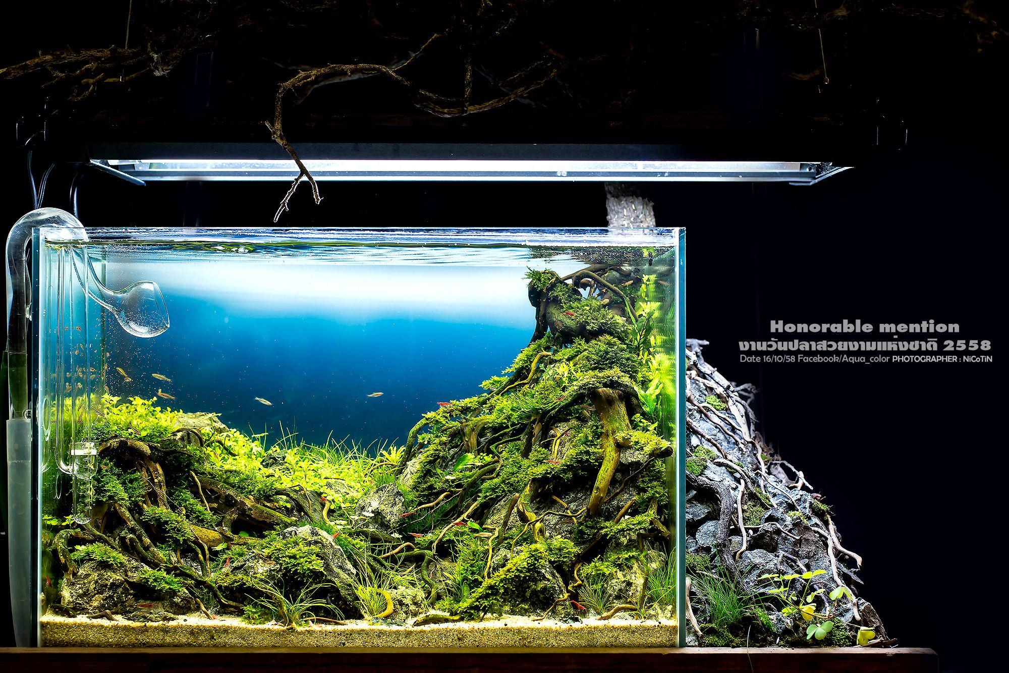 0d63e2d9393c8c881c3482227371c4ce Luxe De Crevette Aquarium Des Idées