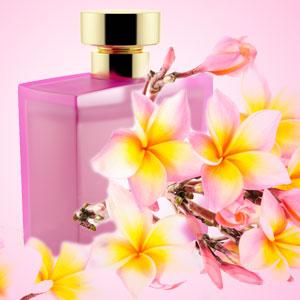 Champaka Fragrance Oil