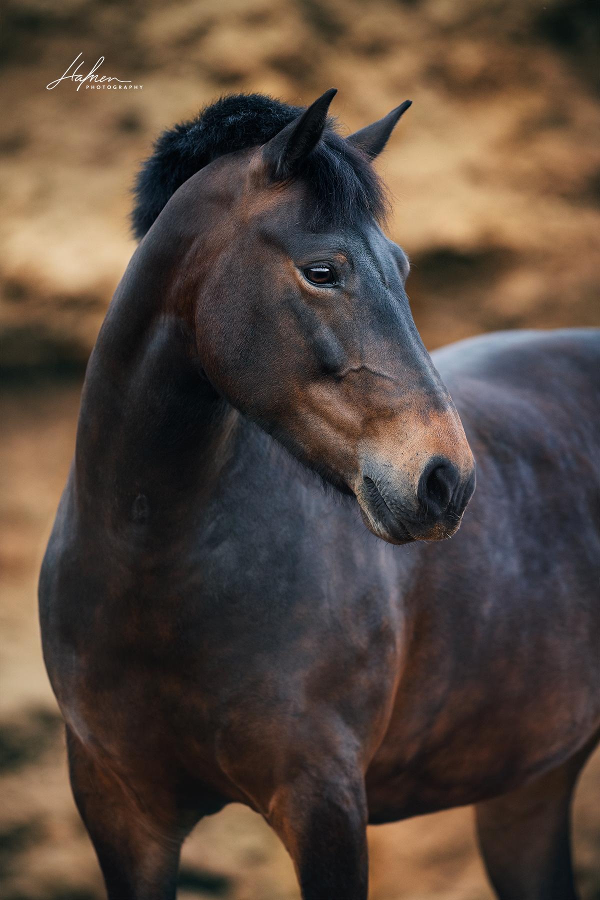 Dunkelbraune Pony Stute Im Portrait Pferd Bilder Foto Fotografie Fotoshooting Pferdefotografie P Pferde Fotografie Pferdefotografie Pferdefotos