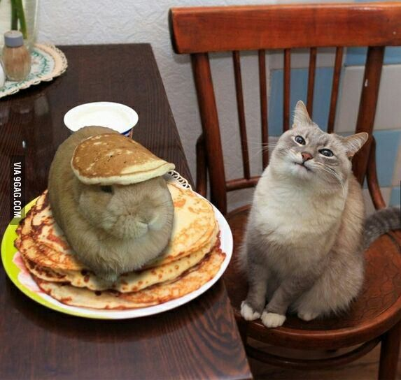 waiter there is a hare in my pancakes 9gag