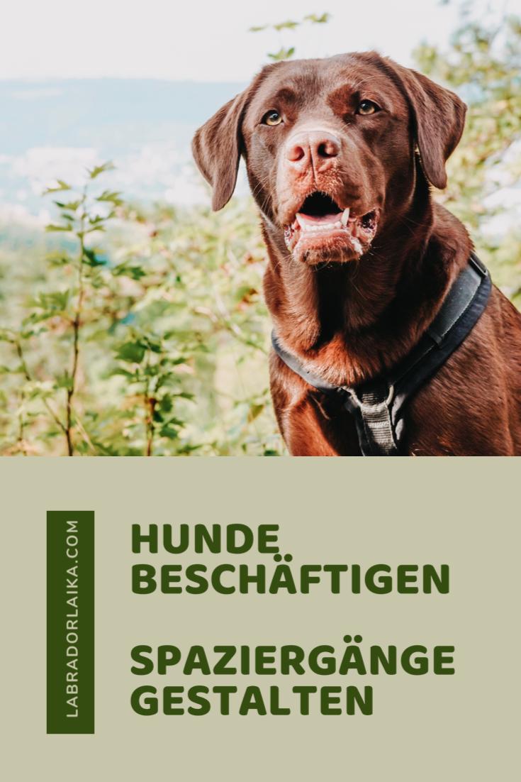 Hunde Beschaftigen Und Spaziergange Gestalten In 2020 Hund Beschaftigen Hunde Hundetricks