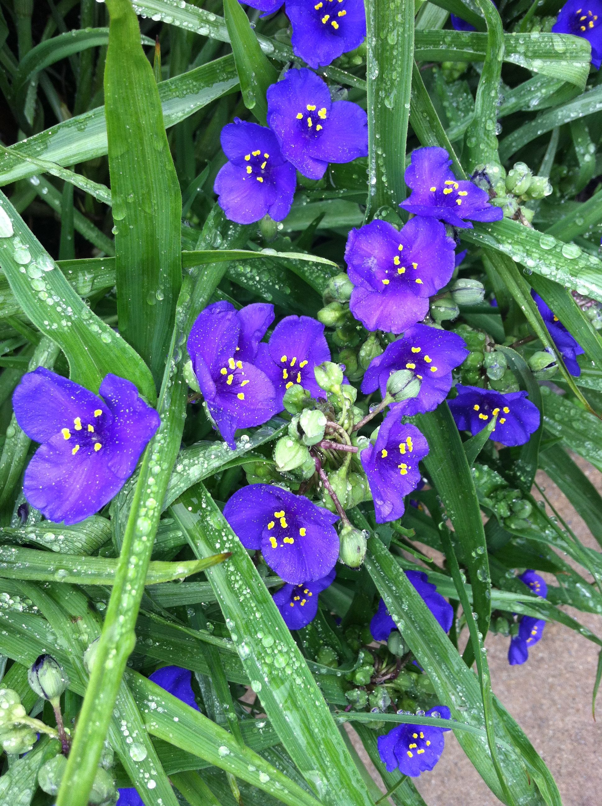 Small Purple Flowers Flowers Pinterest Small Purple Flowers