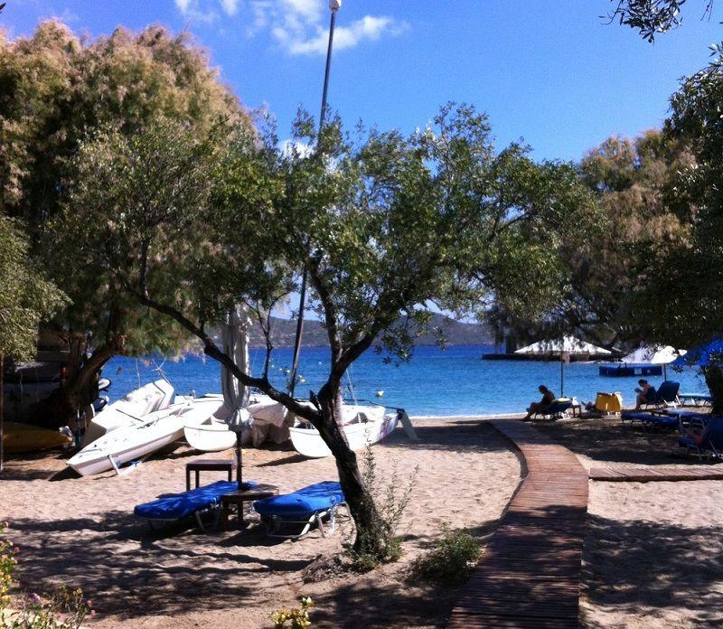 Elounda Crete. An olive tree next to the beach.