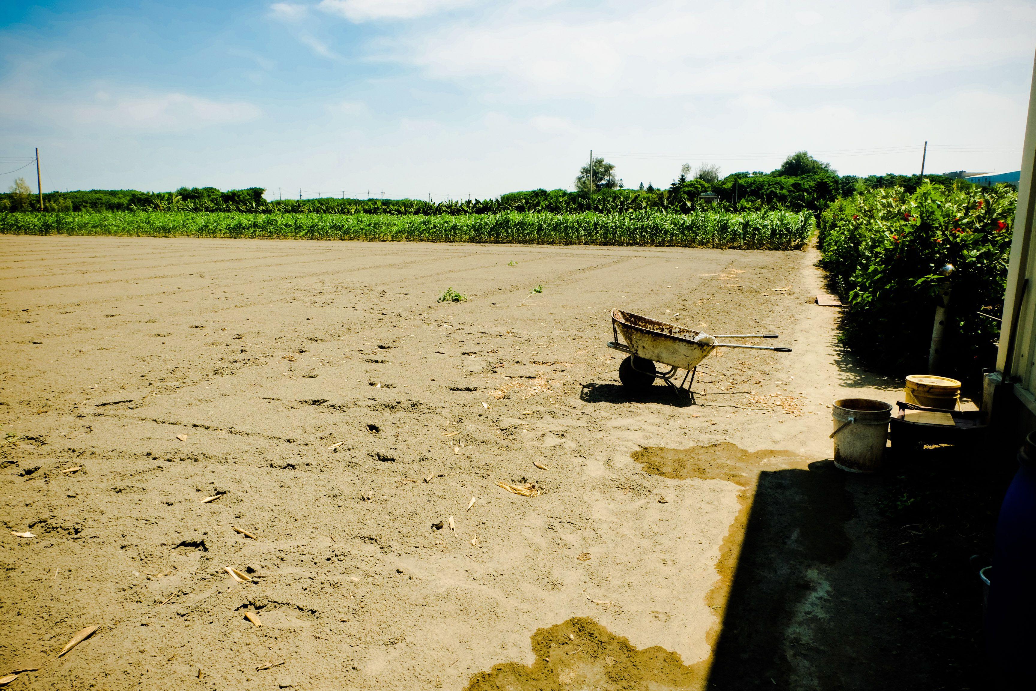 雲林縣台西鄉五榔村----汯蒝有機農場 Yunlin County, Taiwan (R.O.C.)