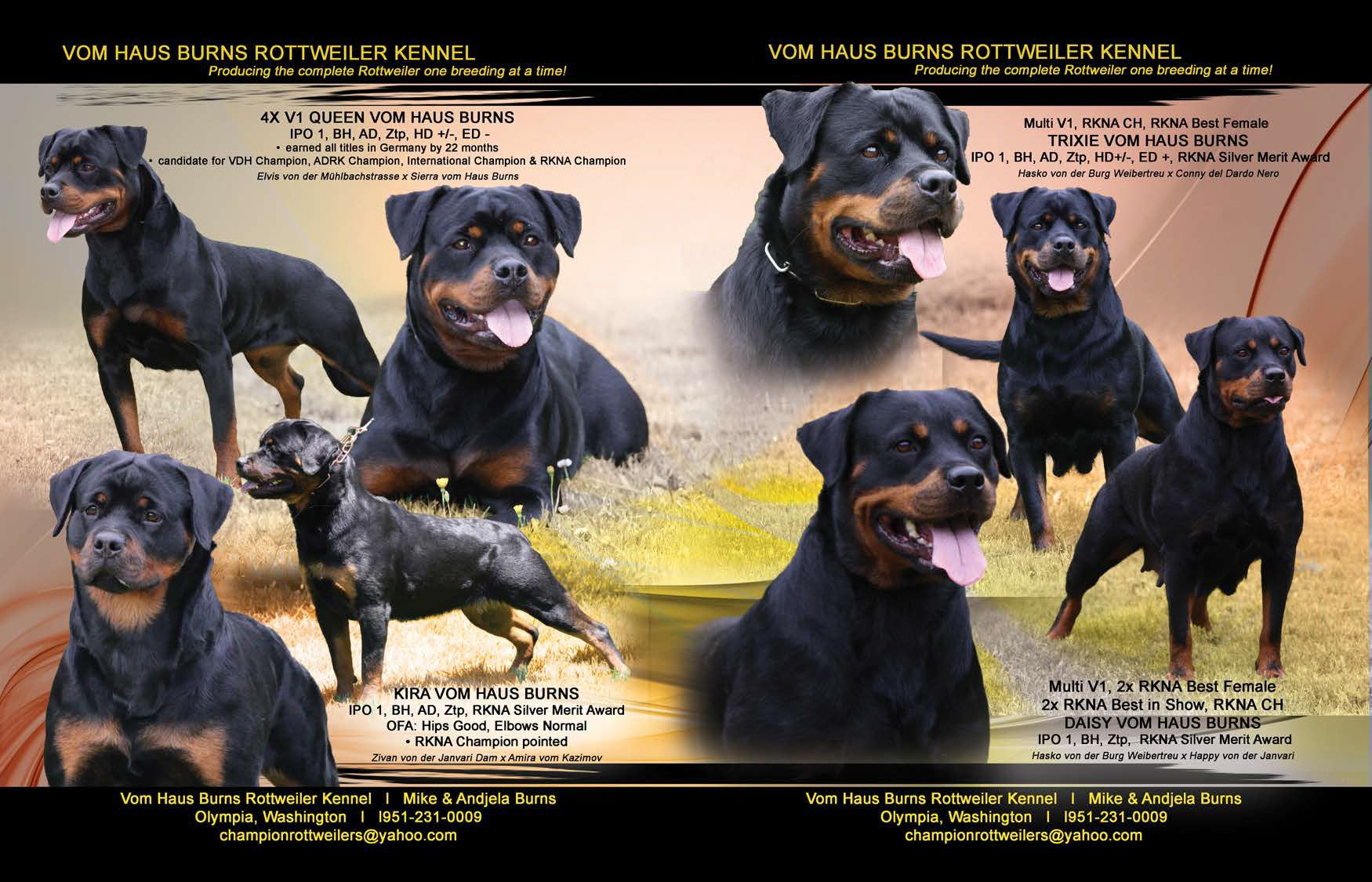 Vom Haus Burns Rottweiler Kennel Producing The Complete Rottweiler