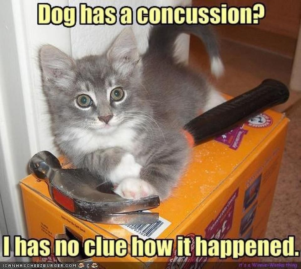 funny cats saying funny things Google Search Funny dog