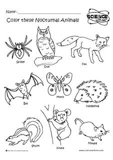 Nocturnal Animals Coloring Sheets Nocturnal Animals Party Ideas