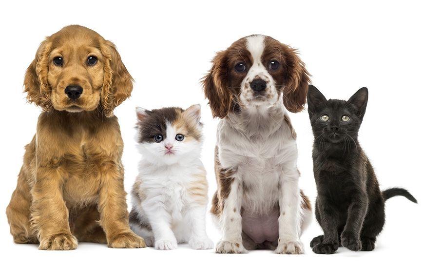 Quiz What pet should you get? Dog boarding near me